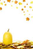 тыквы с осенние листья — Стоковое фото