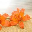 Orange tiger lily — Stock Photo