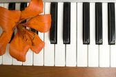 Lilies on the piano — Stock Photo