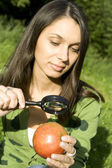 Checking the apple on the natural — Stock Photo
