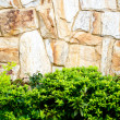 Textured stone wall and plants — Stock Photo #5330997