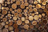 Stump log texture — Stock Photo