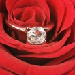 Roses and diamond - Stock Photo