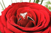 Roses and diamond — Stock Photo