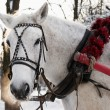Zdjęcie stockowe: White horse is in beautiful team