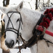 Foto de Stock  : White horse is in beautiful team