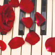 Red rose, petals, black and white piano keys — Stock Photo