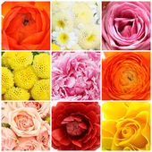 Beautiful flowers collage — Stock Photo