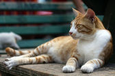 Pretty cat lying outdoors — Stock Photo