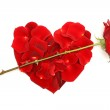 Red rose and petals. Heart - concept of Valentine's Day — Stock Photo