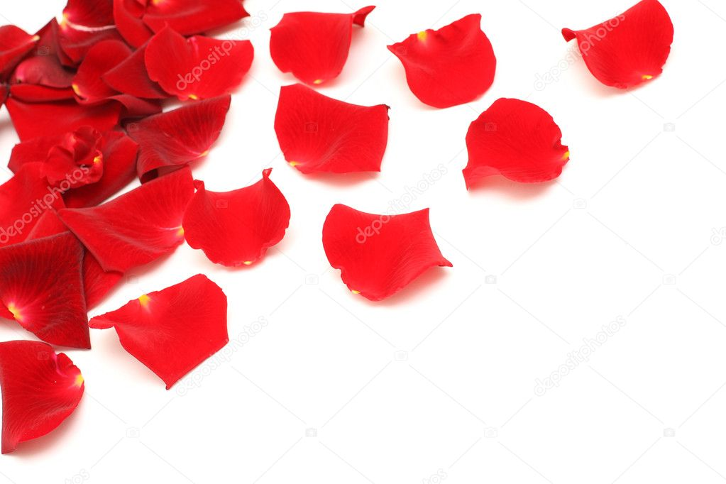 Red rose petals on white — Stock Photo #4669053