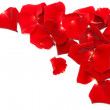 Red rose petals isolated on white background — Stock Photo #4889116