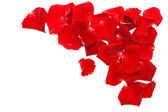 Rote rosenblätter auf weißem hintergrund — Stockfoto