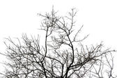 Leafless tree branches silhouette — Stock Photo