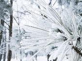 Frozen branches — Stok fotoğraf