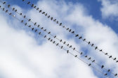 Birds on the electric wire — Stock Photo