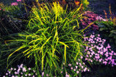 Beautiful colorful garden flowers with grass closeup — Stockfoto