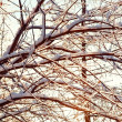 Tree branches covered with icicles — Stock Photo