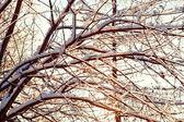 Branches d'arbres couvertes avec des glaçons — Photo