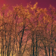Winter trees against red sky — Stock Photo #5337024