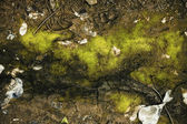 Texture of the soil with green moss and cracks — Stock Photo