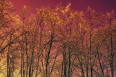 Winter trees against the red sky — Foto Stock