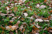 Grass and leaves — Stock Photo