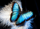 Butterfly and feather — Stock Photo