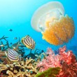 Butterflyfishes and jellyfish - Stock Photo