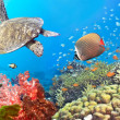 Underwater panorama - Foto Stock