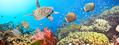 Underwater panorama — Stockfoto