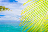Tropical view — Stock Photo