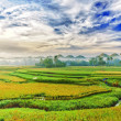 Paddy rice panorama - Stock Photo