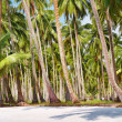 Tropical beach with palm grove - Stock Photo