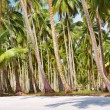 Tropical beach with palm grove - Stok fotoraf