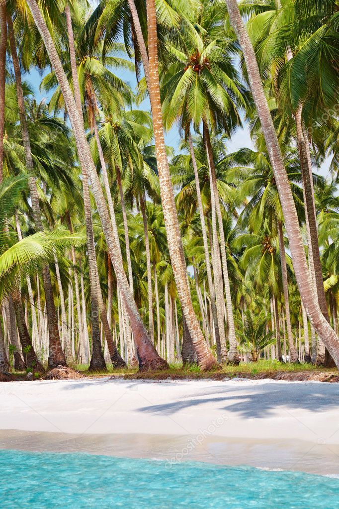 Tropical beach with palm grove, Kood island, Thailand — Stock Photo #4020090