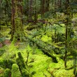 Stock Photo: Primeval forest, New Zealand