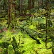 Primeval forest, New Zealand - Stock Photo