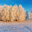 Winter landscape - Foto de Stock