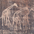 Royalty-Free Stock Photo: Ancient rock engraving in Sahara Desert
