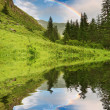 Rainbow over forest - Stock Photo