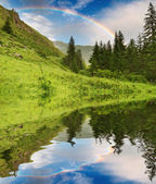 Rainbow over forest — Stockfoto