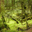 Primeval forest - Foto Stock