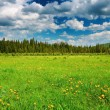 Landscape with green field - Stockfoto