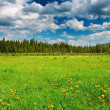 Landscape with green field - Stock Photo