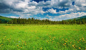 Landscape with green field — Stock Photo