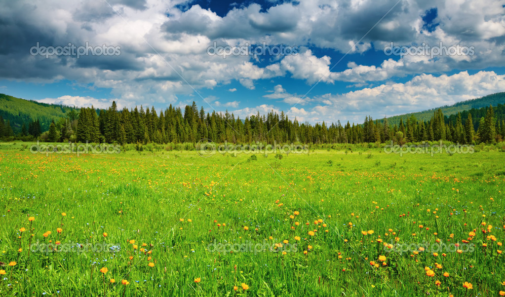 Landscape with green field and cloudy sky — Stock Photo #4913250