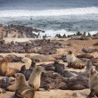 Foto de Stock  : Atlantic seals