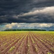 Field with sprouting crops — Stockfoto #4999738