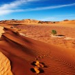 Sahara Desert, Algeria - Stock Photo